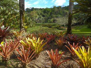 Macaw Lodge, Bromelia Garden